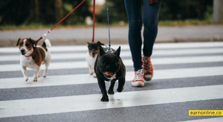Become a Dog Walker